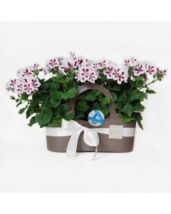 Shopping bag con fioritura stagionale - vari colori